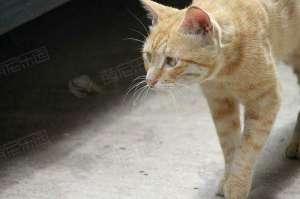 公猫和母猫有什么区别?